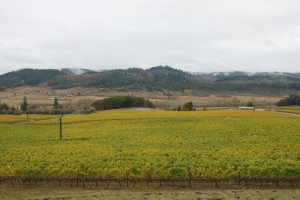 The view from the entrance to King Estate's tasting room