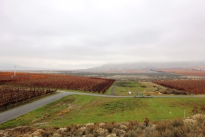 View from Kiona's Tasting Room