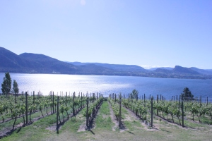 Vineyards overlooking Okanagan Lake from the Naramata Bench